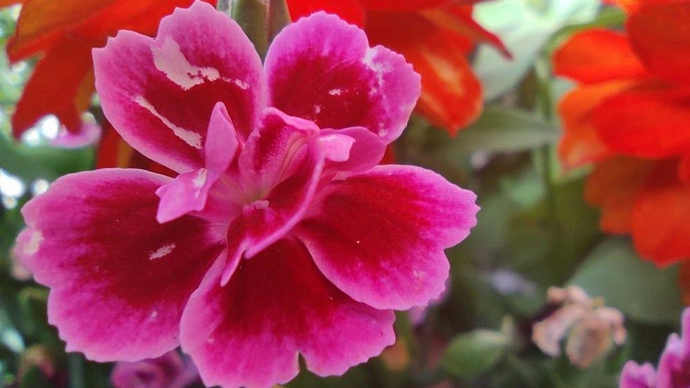 flower photograph taken with macro sensor