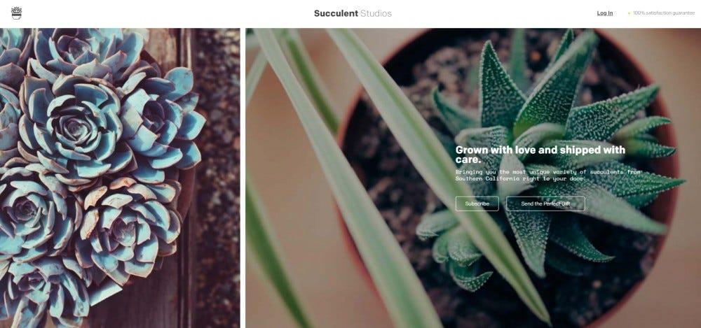 Succulent Studios plant subscription box two succulents each box organic fertilizer biodegradable pot