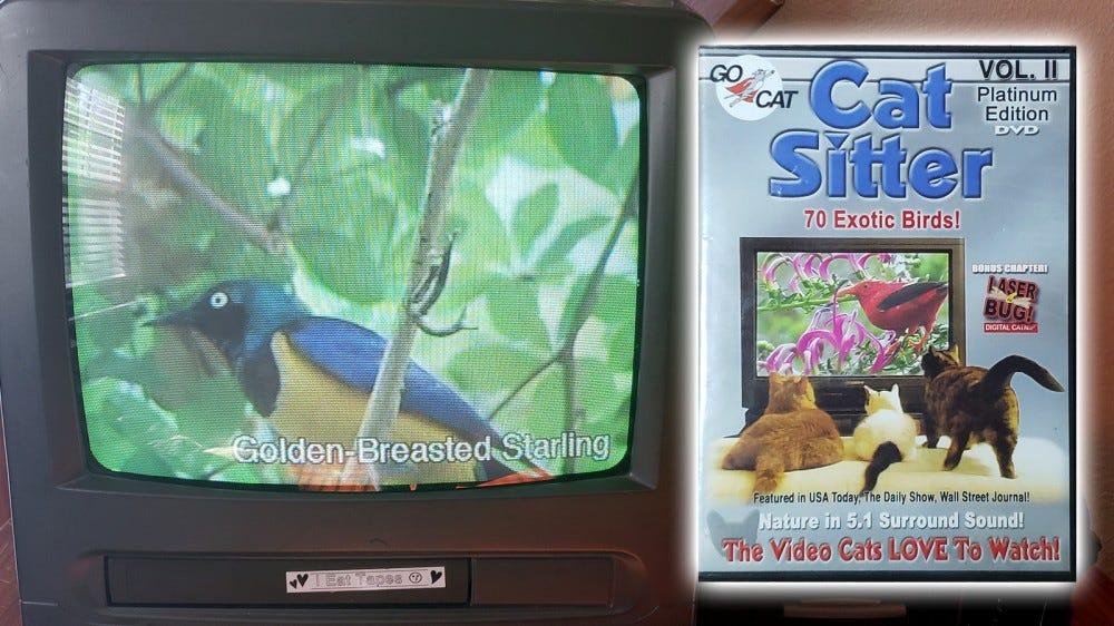Fénykép a Cat Sitter DVD tokról és egy régi TV-ről.