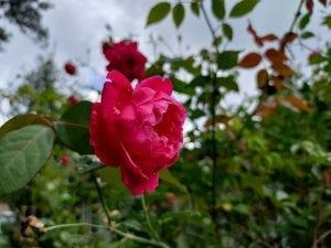 Flower photo.