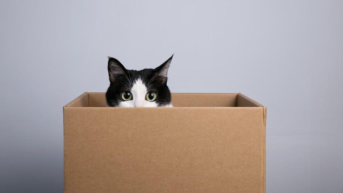 A cute cat peeking from a cardboard box