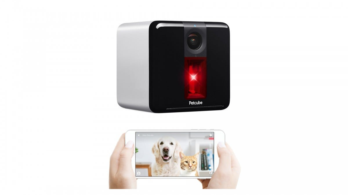 The Petcube smart camera.