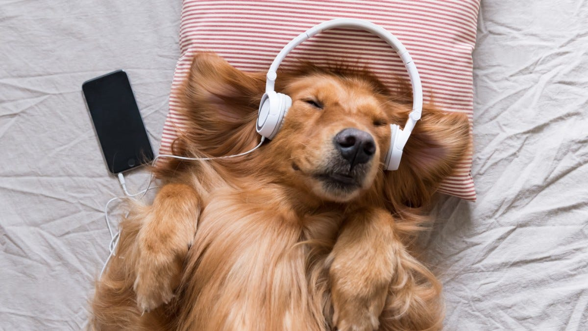 A dog wearing headphones.