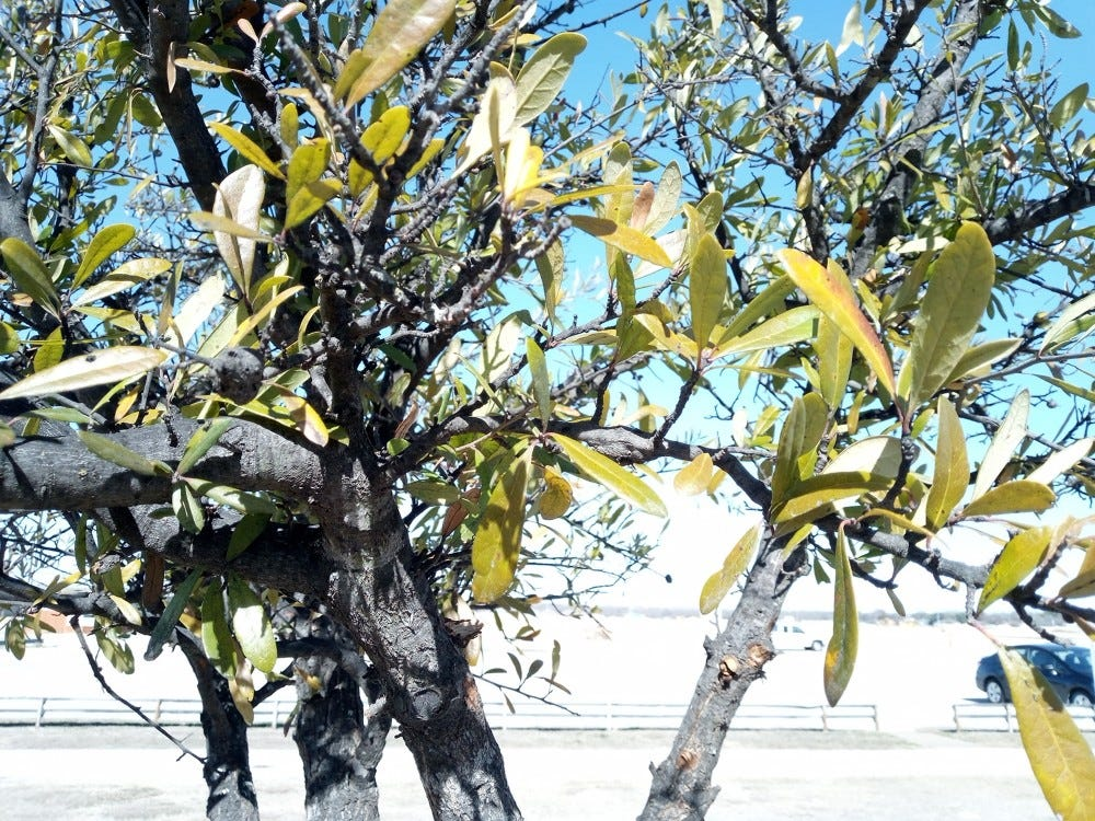 Cat S42 sample photo: tree