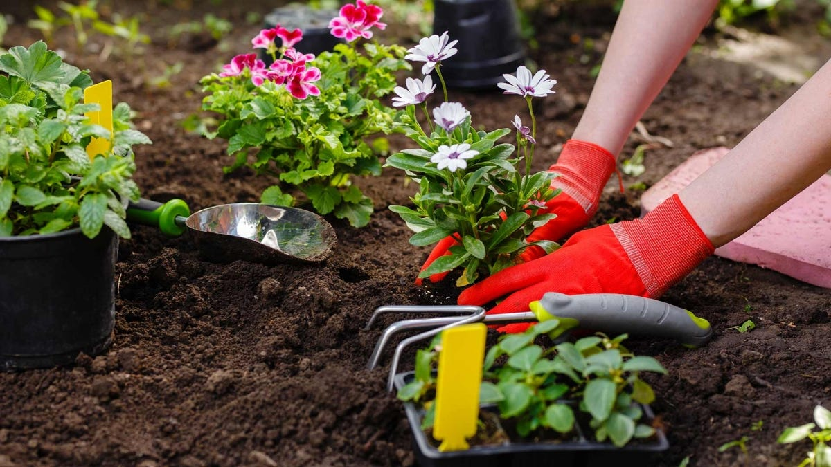 Person planting flowers in a sunny garden