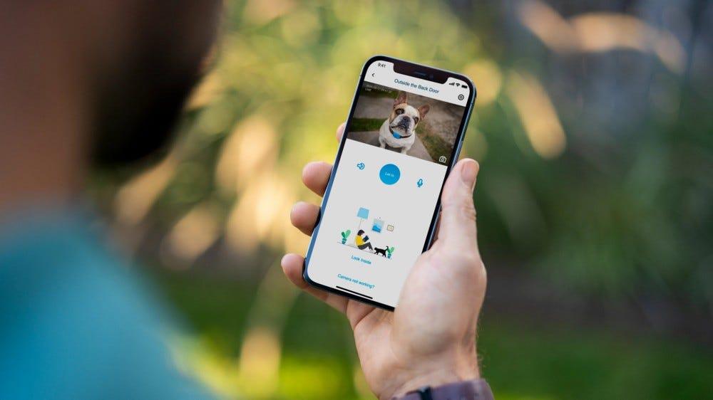 A man looking at a dog through a camera app.