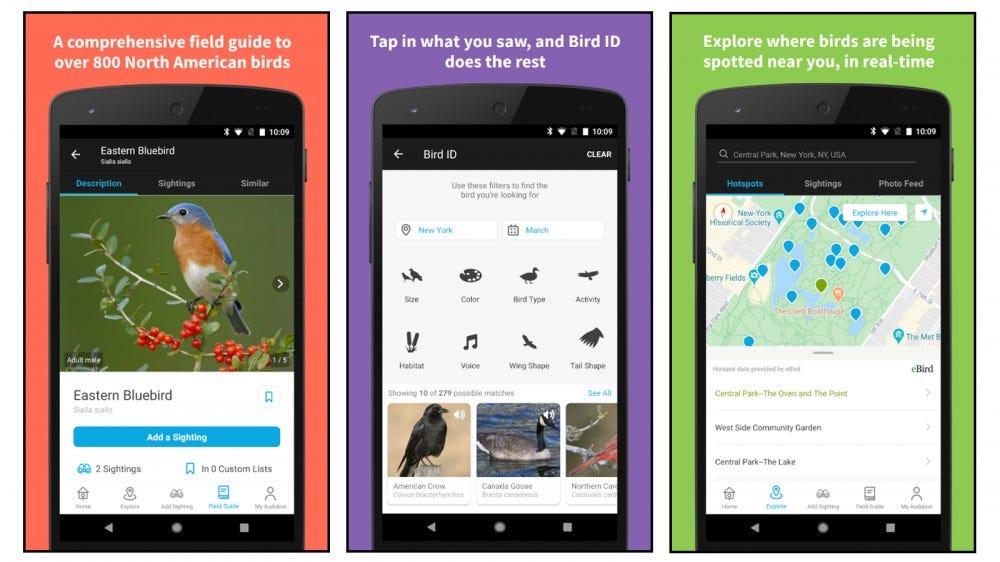 Audubon Bird Guide app screenshots