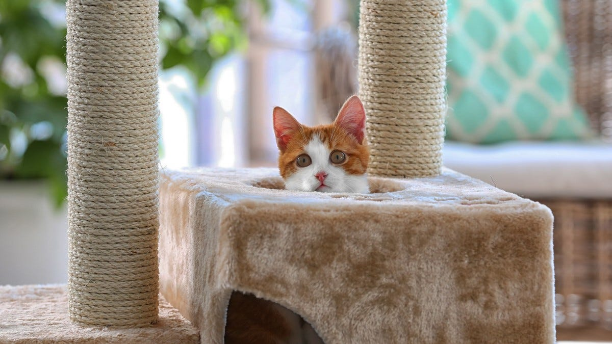 a cute cat sticking its head out of a cat tree.
