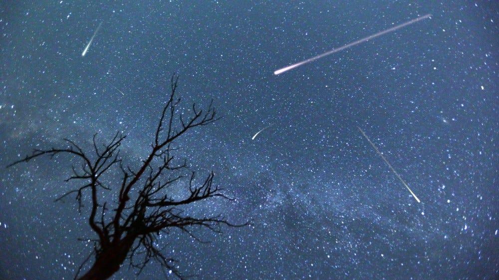 Составное изображение падающих звезд с силуэтом небольшого дерева во время метеорного потока Персеиды 2015 г.