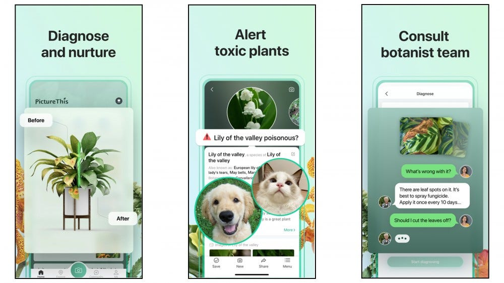 PictureThis app for identifying and taking care of sick plants