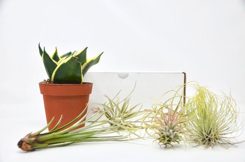 House Plant Box Subscription Box