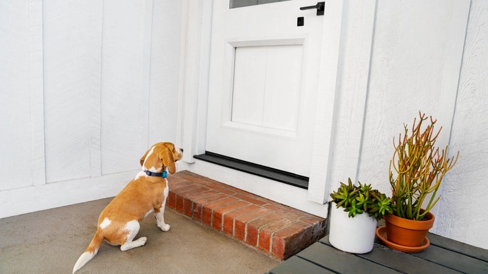 A dog waiting at a door with a seam in the middle.