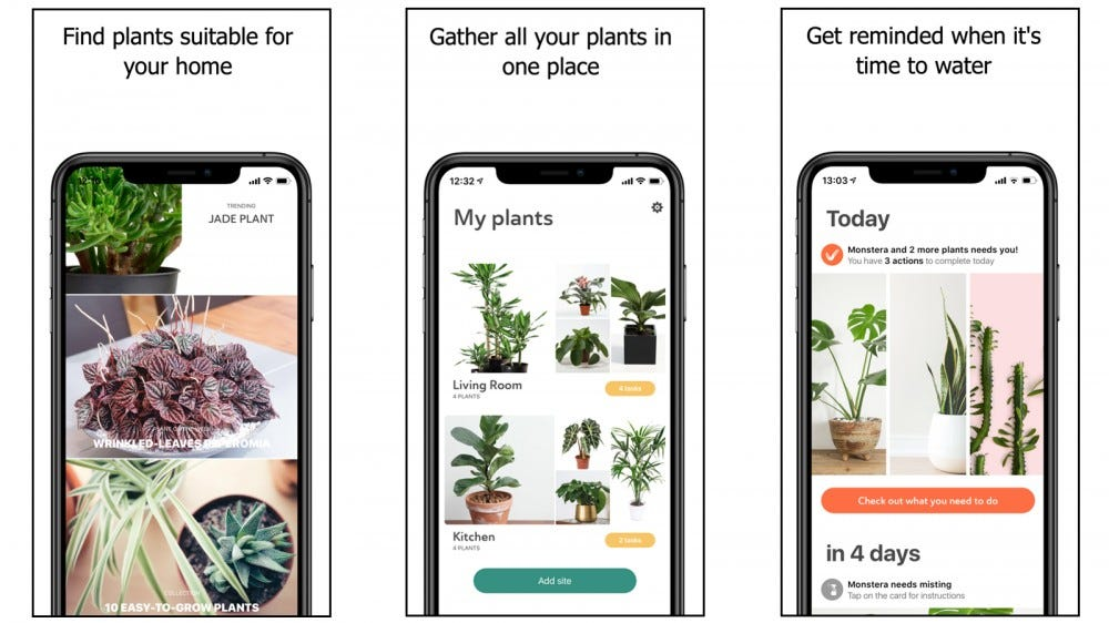 Plant app with plant care tips