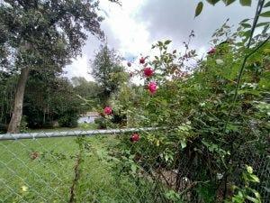 Flowering bush photo.