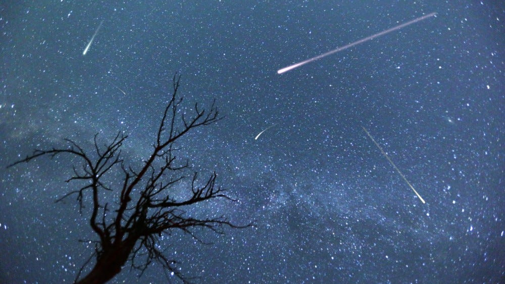 Meteors shooting across the sky with the sihouette of a small bare tree during 2015 Perseids meteor shower