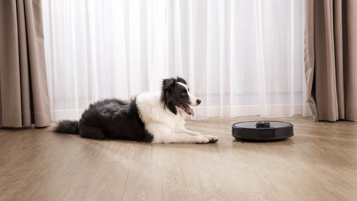 A dog next to a robot vacuum.