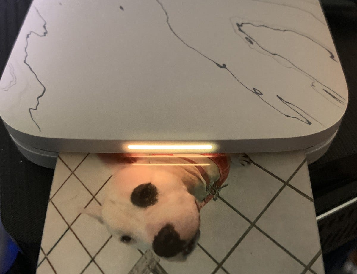 The Sprocket Select printing a photo of a dog.